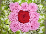 ☺ Roses...