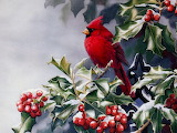 ^ Cardinal on holly