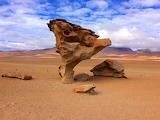 L'arbre en pierre, Salar d'Uyuni, Bolivie