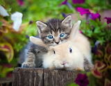 Kitty & rabbit