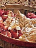 Chats dans les pommes