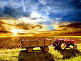 Farmers Morning