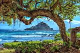 Crage Trunk Tree Koki Beach Hawaii USA