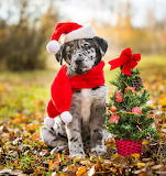 Santa Pup and Tree