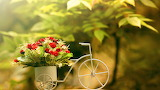 Flowers Bouquet Bicycle