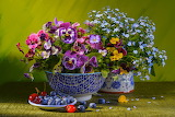 Pansies and Nots