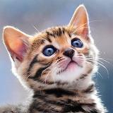 ☺ Bengal Kitten...