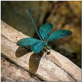 Green-Blue Dragonfly on Wood