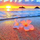 Hawaiian flowers on the beach