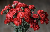 ^ Red Carnations