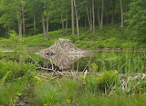 Mile 1474a Beaver Lodge Behind Pine Swamp