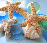 Starfish & Seashells