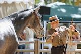 Horse-1966616 1920