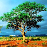 Tsavo National Park...