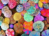 shells rainbow colours