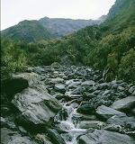 New Zealand - Stream