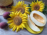 Muskmelon and Sunflowers