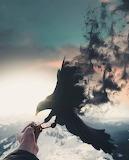 Smokey Crow