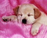 Adorable cachorrito