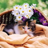 Cute Little Kitten...