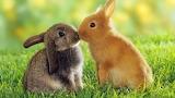 Bunny kiss...