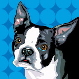 BlueBostonTerrier