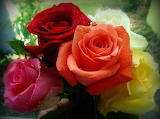 Roses1-600x447
