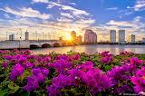 city, flowers