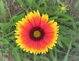 De mi jardín 839