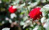 Flower garden plant (350)