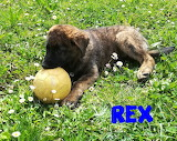 Mascota Rex