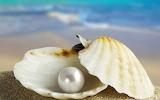 Perla de mar