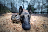 Dog and his buddy the Owl