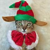 Hello Christmas