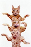 Kitty Macarena