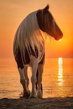 Horse at sunset on beach