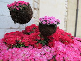 Temps flors 2015 sant daniel 17