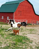 Red barn horse dog