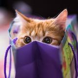 ☺ Funny, playful kitten...☺☺