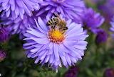 Bee 112 / 80pc