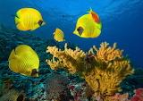 Peixos - Fishes