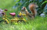 Summer, grass, flowers, nature, bike, animal, dandelions, basket