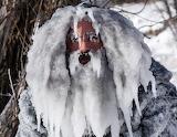 Man In Frost