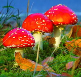 ☺♥ Mushrooms...