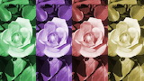 ☺ Collage- Roses...