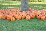 Creature Canyon Pumpkins