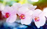 Elegant orchid...