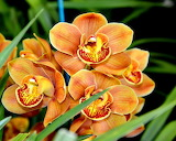 ^ Exotic orchid