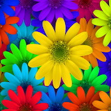 ☺♥ Colorful ...