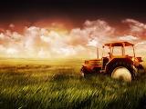Tracteur-champ de blé